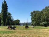 thumbnail - Pferdeweiden im Naturschutzgebiet am See